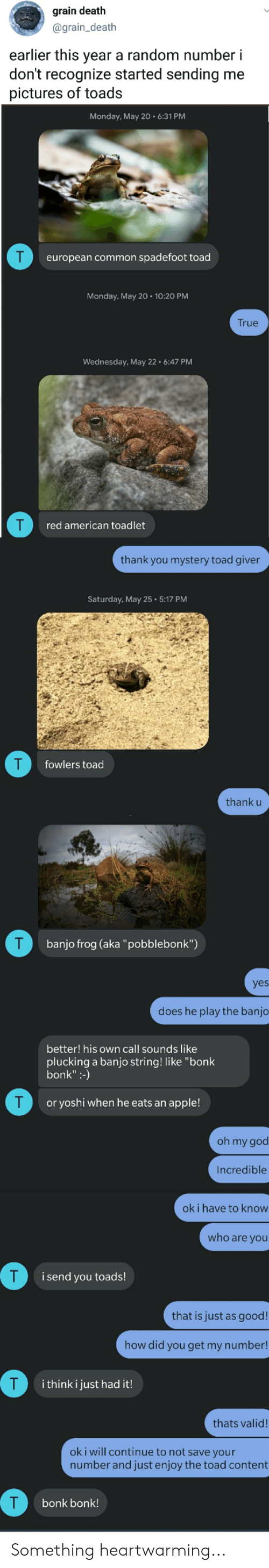 """Apple, God, and Oh My God: grain death  @grain_death  earlier this year a random number i  don't recognize started sending me  pictures of toads  Monday, May 20 6:31 PM  european common spadefoot toad  Monday, May 20 10:20 PM  True  Wednesday, May 22 6:47 PM  red american toadlet  thank you mystery toad giver  Saturday, May 25 5:17 PM  fowlers toad  thank u  T  banjo frog (aka """"pobblebonk"""")  yes  does he play the banjo  better! his own call sounds like  plucking a banjo string! like """"bonk  bonk"""":-)  T  or yoshi when he eats an apple!  oh my god  Incredible  oki have to know  who are you  T  i send you toads!  that is just as good!  how did you get my number!  T  i think i just had it!  thats valid!  oki will continue to not save your  number and just enjoy the toad content  T  bonk bonk! Something heartwarming..."""