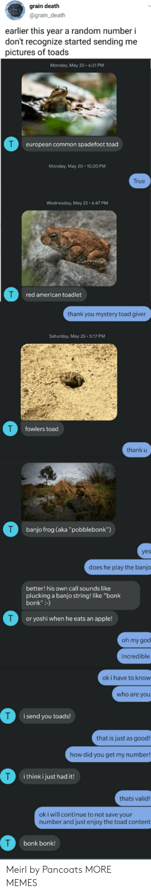 """Apple, Dank, and God: grain death  @grain_death  earlier this year a random number i  don't recognize started sending me  pictures of toads  Monday, May 206:31 PM  european common spadefoot toad  Monday, May 20 10:20 PM  True  Wednesday, May 22 6:47 PM  T  red american toadlet  thank you mystery toad giver  Saturday, May 25 5:17 PM  T  fowlers toad  thank u  T  banjo frog (aka""""pobblebonk"""")  yes  does he play the banjo  better! his own call sounds like  plucking a banjo string! like """"bonk  bonk:-)  T  or yoshi when he eats an apple!  oh my god  Incredible  ok i have to know  who are you  i send you toads!  that is just as good!  how did you get my number!  i think i just had it!  thats valid!  ok i will continue to not save your  number and just enjoy the toad content  bonk bonk! Meirl by Pancoats MORE MEMES"""