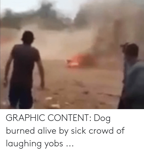 GRAPHIC CONTENT Dog Burned Alive by Sick Crowd of Laughing Yobs