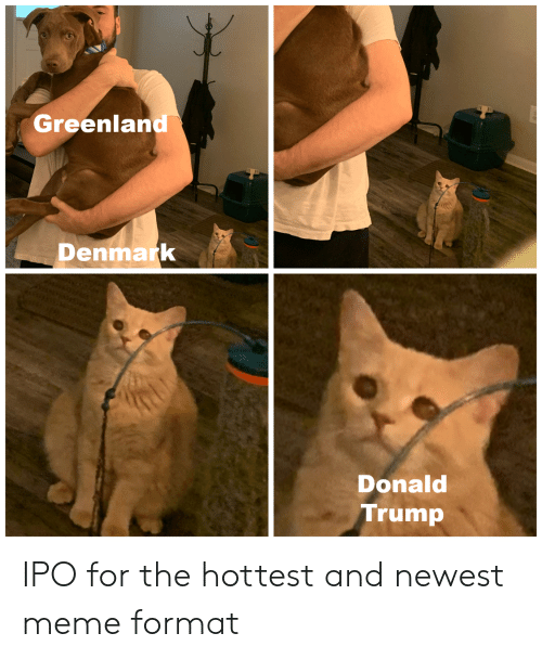 Donald Trump, Meme, and Denmark: Greenland  Denmark  Donald  Trump IPO for the hottest and newest meme format