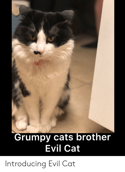 🐣 25+ Best Memes About Grumpy Cats Brother | Grumpy Cats