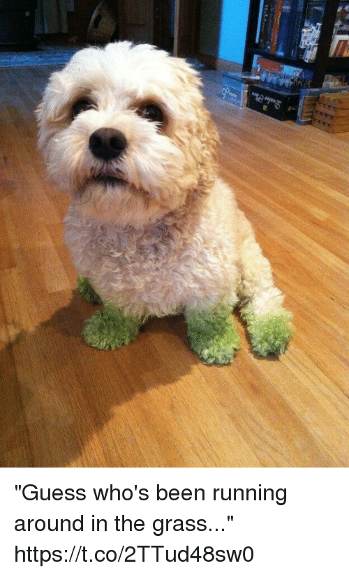 "Grasse: ""Guess who's been running around in the grass..."" https://t.co/2TTud48sw0"