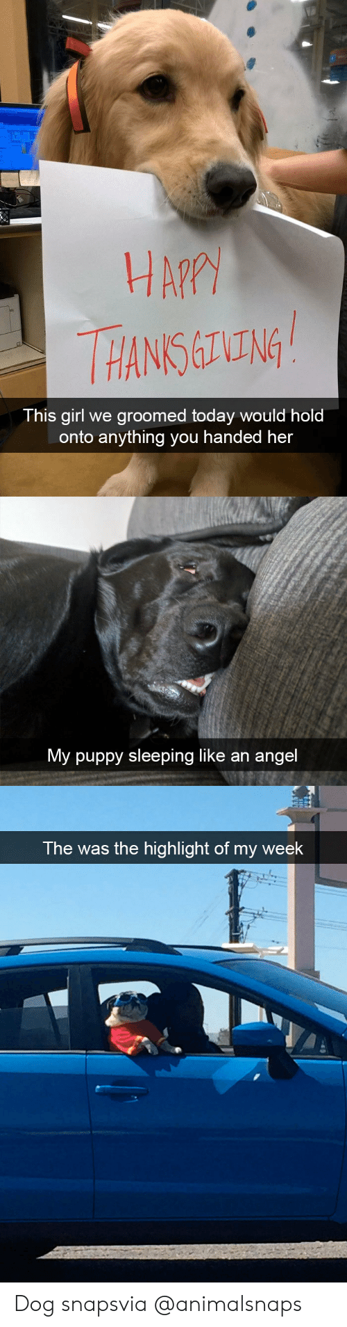 Target, Tumblr, and Angel: HA?  HANS ING  This girl we groomed today would hold  onto anything you handed her   My puppy sleeping like an angel   The was the highlight of my week Dog snapsvia @animalsnaps