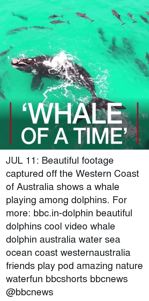 Dolphinately: HALE  OF A TIME JUL 11: Beautiful footage captured off the Western Coast of Australia shows a whale playing among dolphins. For more: bbc.in-dolphin beautiful dolphins cool video whale dolphin australia water sea ocean coast westernaustralia friends play pod amazing nature waterfun bbcshorts bbcnews @bbcnews