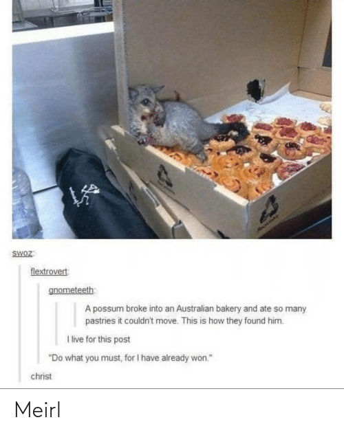 "So Many: HAOLIAY  SWOZ:  flextrovert  gnometeeth  A possum broke into an Australian bakery and ate so many  pastries it couldn't move. This is how they found him.  I live for this post  ""Do what you must, for I have already won.""  christ Meirl"