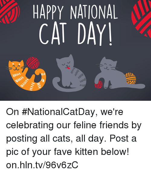 Happy National Cat Day: HAPPY NATIONAL  CAT DAY On #NationalCatDay, we're celebrating our feline friends by posting all cats, all day. Post a pic of your fave kitten below! on.hln.tv/96v6zC