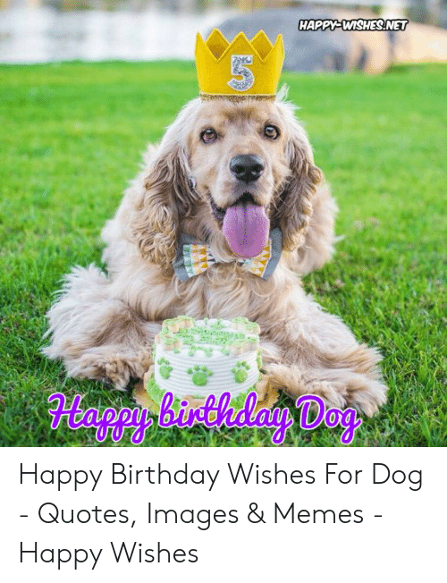 Birthday Memes And Happy HAPPY WISHESNET 5 Wishes For