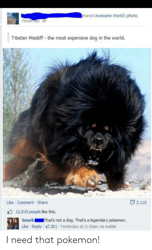 People Like: hared Awesome World's photo,  Yesteruay  Tibetan Mastiff - the most expensive dog in the world.  D 3,115  Like Comment Share  6 13,810 people like this.  Snark  That's not a dog. That's a legendary pokemon.  Reply 3 281 Yesterday at 3:10am via mobile  Like I need that pokemon!
