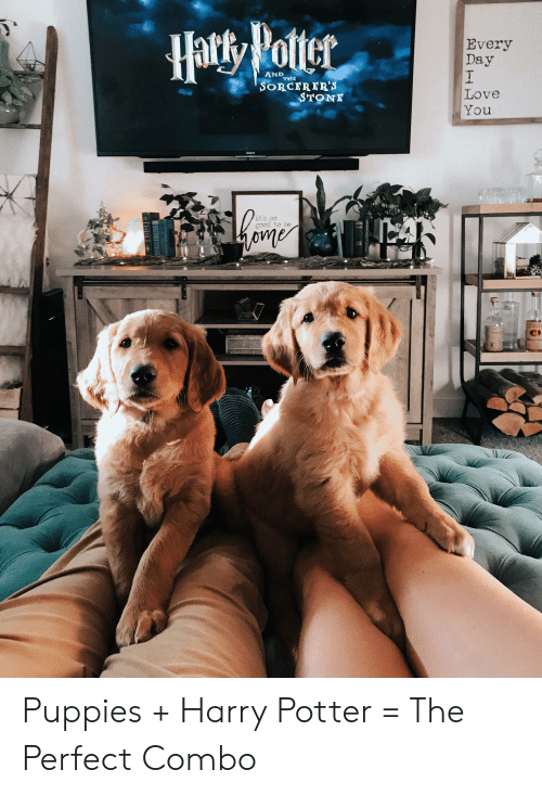 Harry Potter, Love, and Puppies: Haty Votter  Every  Day  I  Love  You  AND  SORCERER'S  STONE  its so  good to be Puppies + Harry Potter = The Perfect Combo