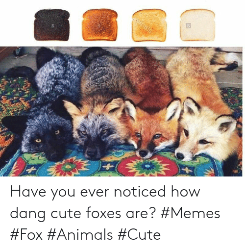 Animals: Have you ever noticed how dang cute foxes are? #Memes #Fox #Animals #Cute