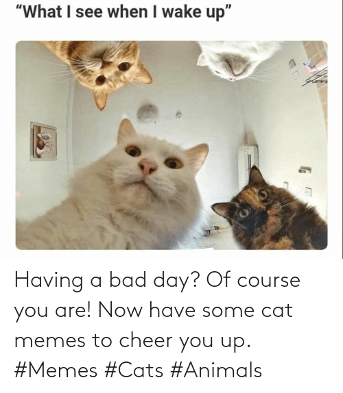Having A Bad Day: Having a bad day? Of course you are! Now have some cat memes to cheer you up. #Memes #Cats #Animals