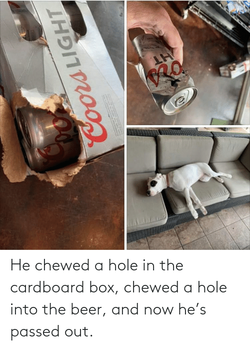 And Now: He chewed a hole in the cardboard box, chewed a hole into the beer, and now he's passed out.