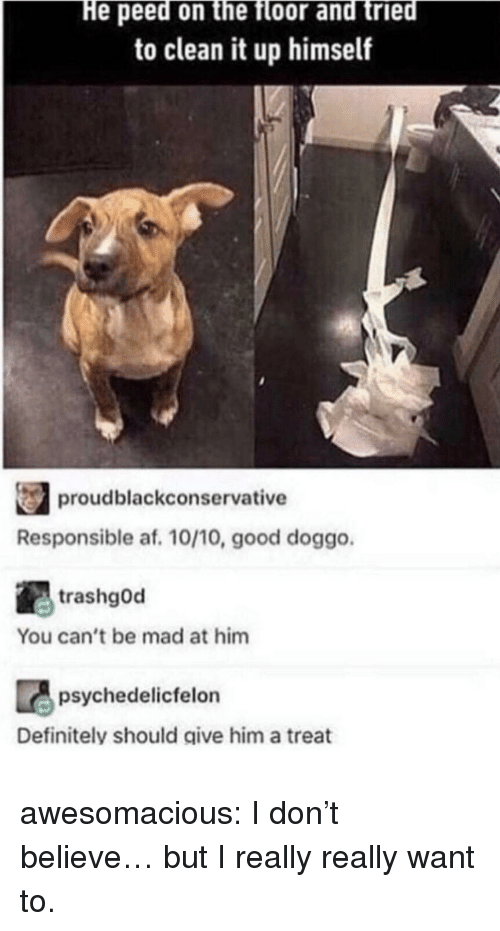 Af, Definitely, and Tumblr: He peed on the floor and tried  to clean it up himself  proudblackconservative  Responsible af. 10/10, good doggo  trashgOd  You can't be mad at him  psychedelicfelon  Definitely should give him a treat awesomacious:  I don't believe… but I really really want to.