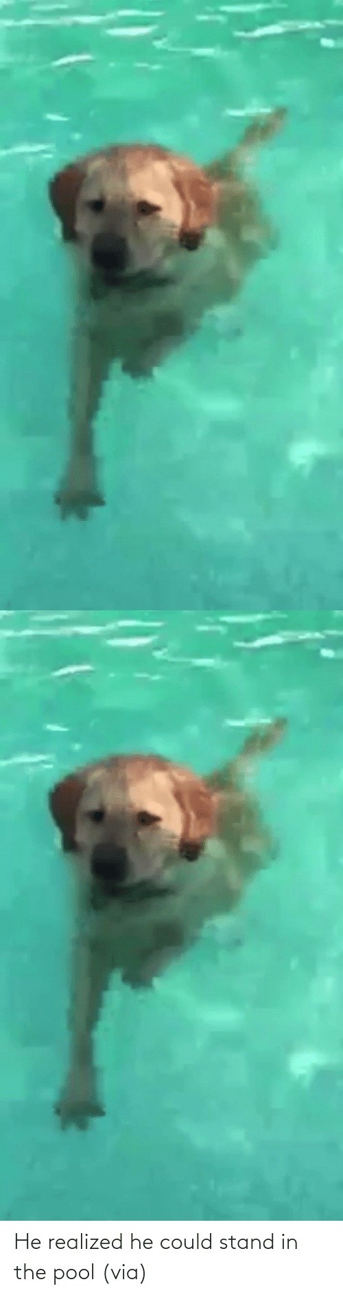 Could: He realized he could stand in the pool(via)