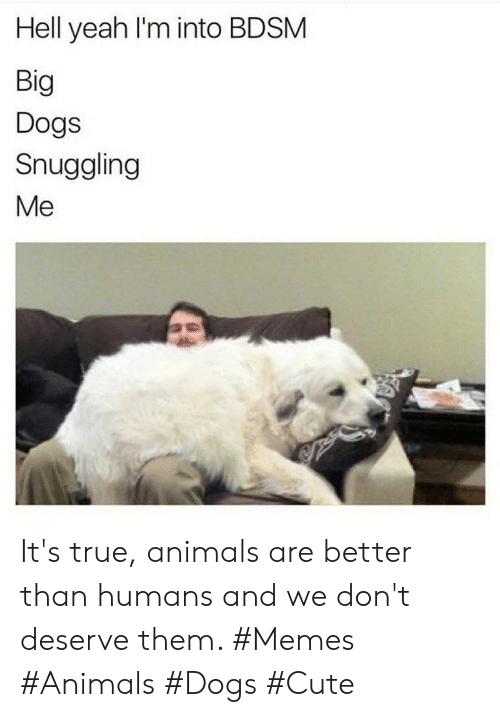 Its True: Hell yeah I'm into BDSM  Big  Dogs  Snuggling  Me It's true, animals are better than humans and we don't deserve them. #Memes #Animals #Dogs #Cute