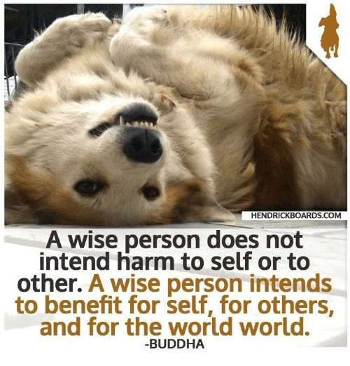 Memes, Buddha, and World: HENDRICKBOARDS COM  A wise person does not  intend harm to self or to  other. A wise person intends  to benefit for self, for others  and for the world world.  BUDDHA