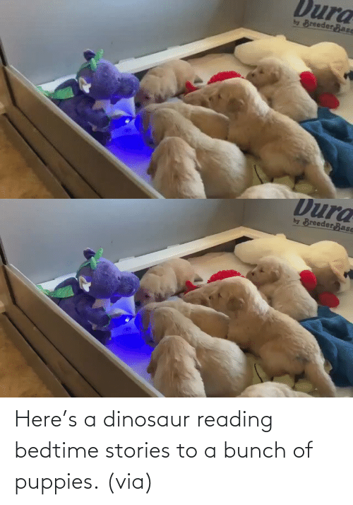reading: Here's a dinosaur reading bedtime stories to a bunch of puppies. (via)
