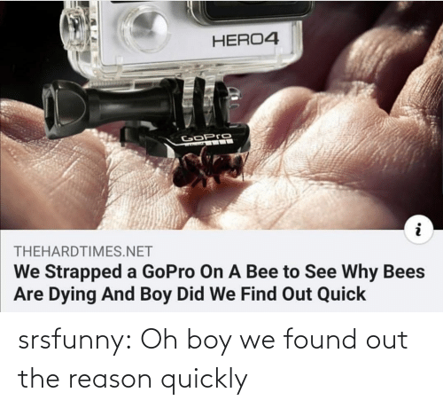 Bees: HERO4  GoPro  THEHARDTIMES.NET  We Strapped a GoPro On A Bee to See Why Bees  Are Dying And Boy Did We Find Out Quick srsfunny:  Oh boy we found out the reason quickly