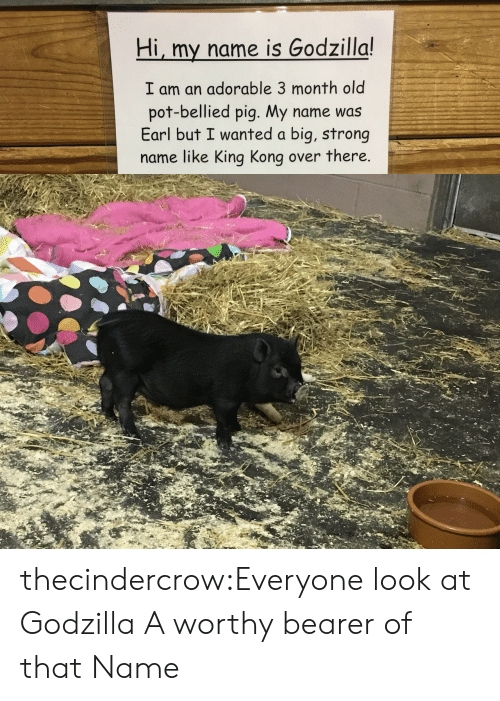 Hi My: Hi, my name is Godzilla!  I am an adorable 3 month old  pot-bellied pig. My name was  Earl but I wanted a big, strong  name like King Kong over there. thecindercrow:Everyone look at Godzilla  A worthy bearer of that Name