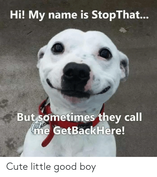 Hi My: Hi! My name is StopThat...  But sometimes they call  me GetBackHere! Cute little good boy