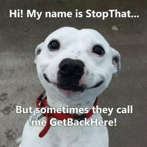 Hi My: Hi! My name is StopThat...  But sometimes they call  me GetBackHere!