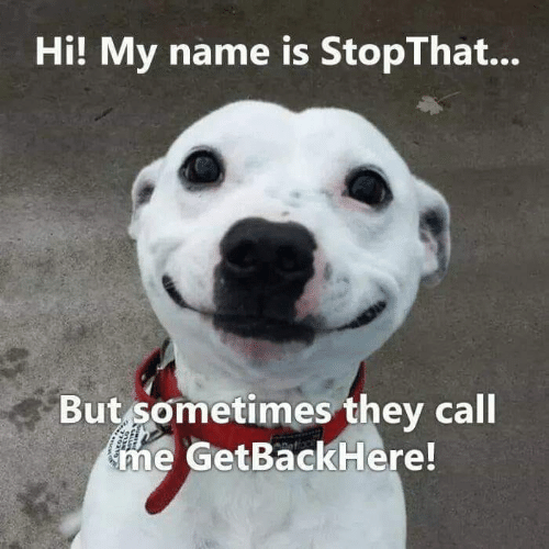 Hi My: Hi! My name is StopThat...  But sometimes they call  ne GetBackHere!
