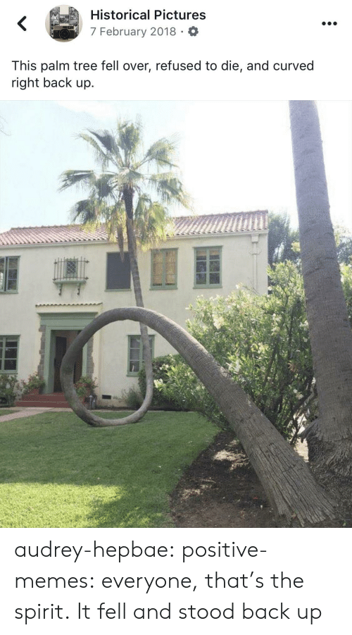 Memes, Tumblr, and Blog: Historical Pictures  7 February 2018 O  This palm tree fell over, refused to die, and curved  right back up.  C) audrey-hepbae: positive-memes: everyone, that's the spirit.  It fell and stood back up