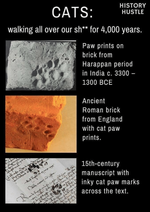 Ancient: HISTORY  CATS:  HUSTLE  walking all over our sh** for 4,000 years.  Paw prints on  brick from  Harappan period  in India c. 3300 -  1300 BCE  Ancient  Roman brick  from England  with cat paw  prints.  15th-century  manuscript with  inky cat paw marks  IL  across the text.  R