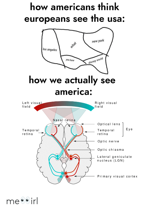 America, Disney, and New York: how americans think  europeans see the usa:  new york  los angeles  rld  yee haw  disney wo  how we actually see  america  Left visua  field  Right visual  field  Nasal retina  Optical lens  Temporal  Eye  Temporal  retina  retina  Optic nerve  Optic chiasma  Lateral geniculate  nucleus (LGN)  Primary visual cortex me👀irl