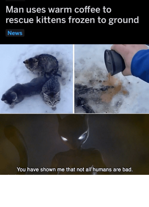 The First: How did they get frozen to the ground in the first place