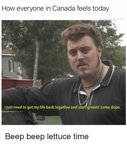 Dope, Life, and Canada: How everyone in Canada feels today  @cabbagecatmemes  I just need to get my life back together and start growin' some dope. Beep beep lettuce time