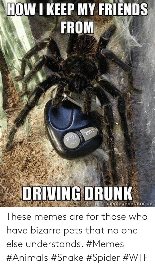 lock: HOW I KEEP MY FRIENDS  FROM  LOCK  LOCK  memegenerator.net  DRIVING DRUNK These memes are for those who have bizarre pets that no one else understands. #Memes #Animals #Snake #Spider #WTF