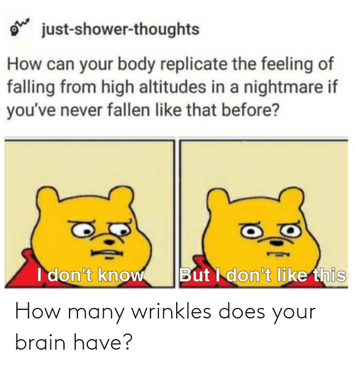 Brain: How many wrinkles does your brain have?