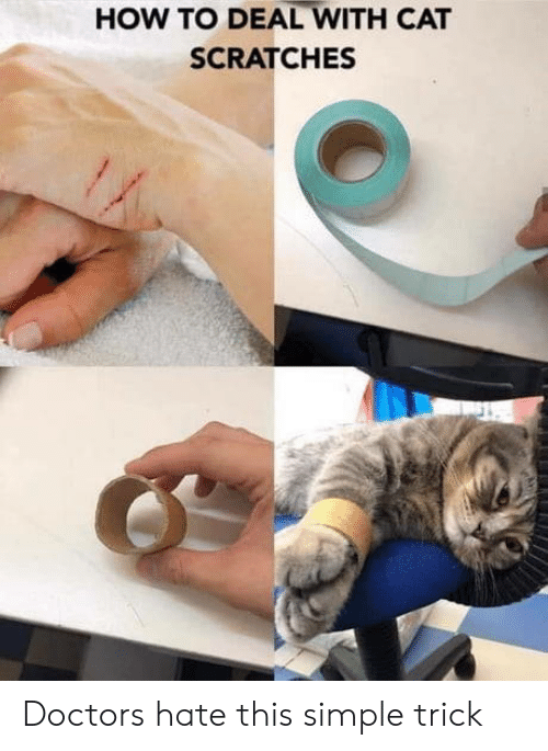 How To, How, and Simple: HOW TO DEAL WITH CAT  SCRATCHES Doctors hate this simple trick
