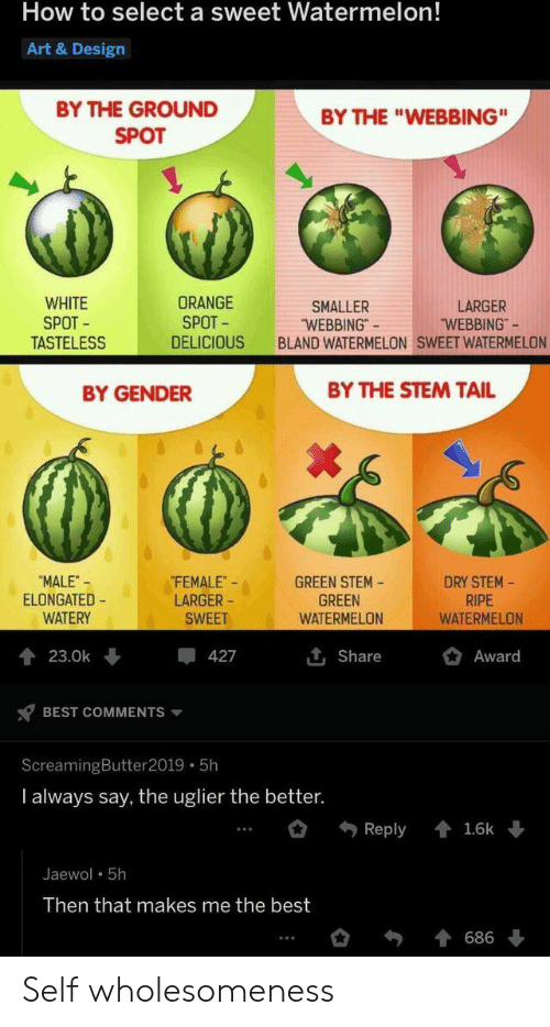"""Elongated: How to select a sweet Watermelon!  Art & Design  BY THE GROUND  BY THE """"WEBBING""""  SPOT  WHITE  SPOT  TASTELESS  ORANGE  SPOT  LARGER  """"WEBBING""""  SMALLER  """"WEBBING""""  BLAND WATERMELON SWEET WATERMELON  DELICIOUS  BY THE STEM TAIL  BY GENDER  FEMALE  LARGER  DRY STEM-  RIPE  WATERMELON  """"MALE-  ELONGATED  WATERY  GREEN STEM  GREEN  WATERMELON  SWEET  Award  23.0k  427  Share  BEST COMMENTS  ScreamingButter 2019 5h  I always say, the uglier the better.  Reply  1.6k  Jaewol 5h  Then that makes me the best  686 Self wholesomeness"""