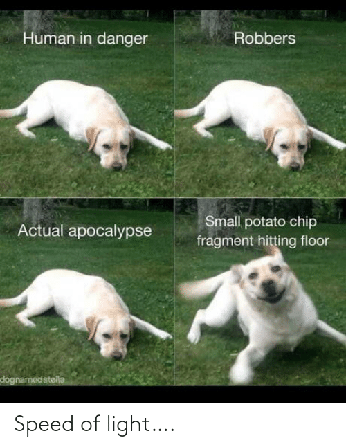 human: Human in danger  Robbers  Small potato chip  Actual apocalypse  fragment hitting floor  dognamedstella Speed of light….