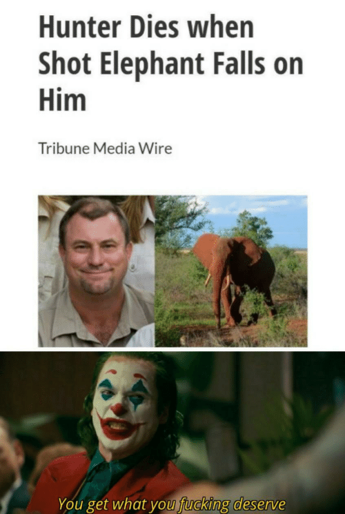 hunter: Hunter Dies when  Shot Elephant Falls on  Him  Tribune Media Wire  You get what you fucking deserve