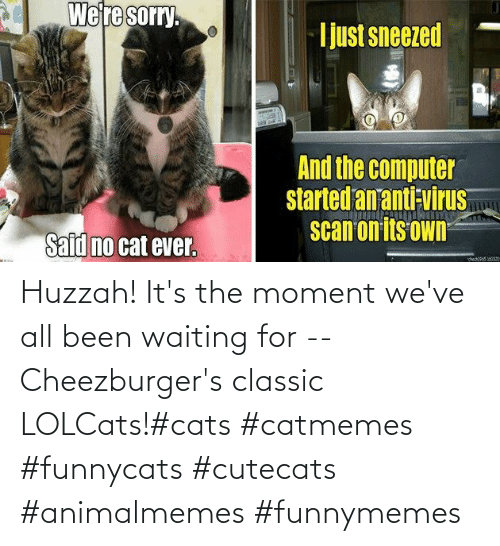 Waiting For: Huzzah! It's the moment we've all been waiting for -- Cheezburger's classic LOLCats!#cats #catmemes #funnycats #cutecats #animalmemes #funnymemes
