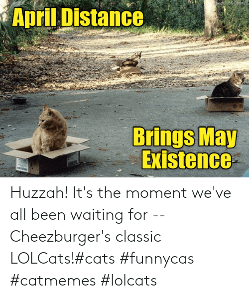 Waiting...: Huzzah! It's the moment we've all been waiting for -- Cheezburger's classic LOLCats!#cats #funnycas #catmemes #lolcats