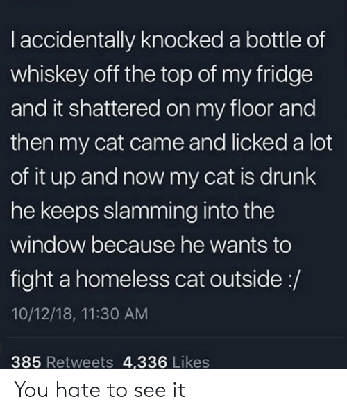 Drunk, Homeless, and Thathappened: I accidentally knocked a bottle of  whiskey off the top of my fridge  and it shattered on my floor and  then my cat came and licked a lot  of it up and now my cat is drunk  he keeps slamming into the  window because he wants to  fight a homeless cat outside :/  10/12/18, 11:30 AM  385 Retweets 4,336 Likes You hate to see it