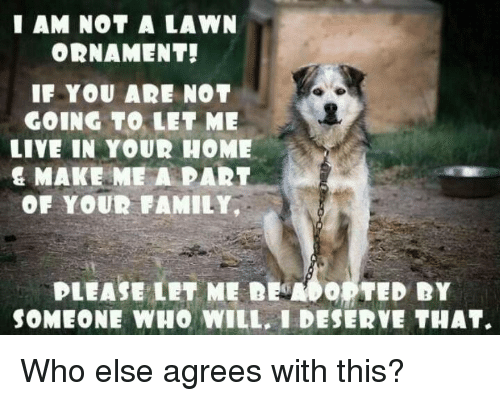 Ðÿ†: I AM NOT A LAWN  ORNAMENT!  IF YOU AR NOT  GOING TO LET ME  LIVE IN YOUR HOME  & MAKE ME A PART  OF YOUR FAMILY,  PLEASE LET ME DEMO。 TED DY  SOMEONE WHO WILL, I DESERVE THAT. Who else agrees with this?