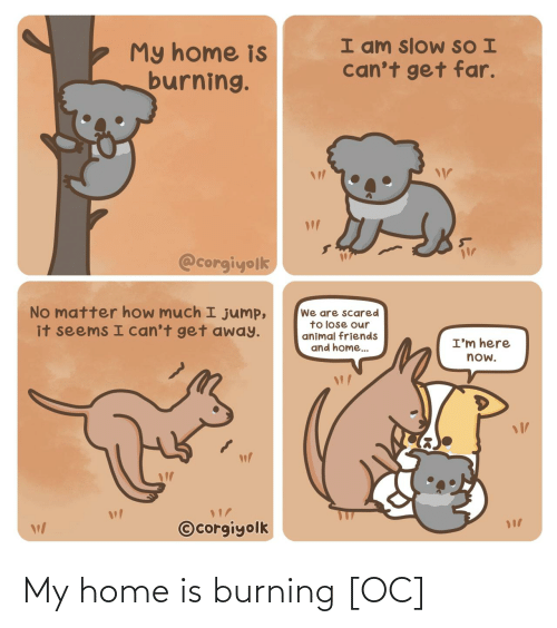 Cant: I am slow SO I  can't get far.  My home is  burning.  @corgiyolk  No matter how much I jump,  it seems I can't get away.  We are scared  to lose our  animal friends  and home..  I'm here  now.  ©corgiyolk My home is burning [OC]