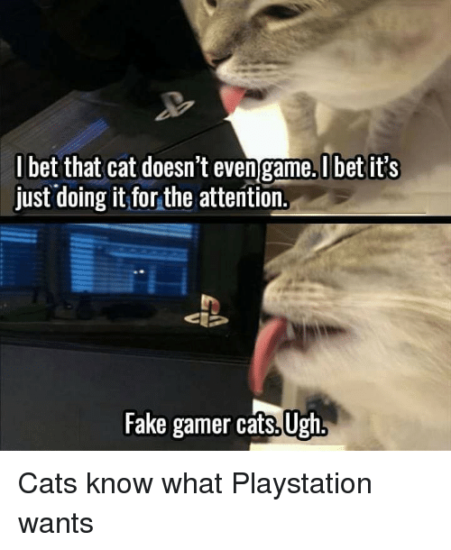 Cats, Fake, and I Bet: I bet that cat doesn't even game.Ubet it's  just doing it for the attention.  Fake gamer cats, Ugh Cats know what Playstation wants