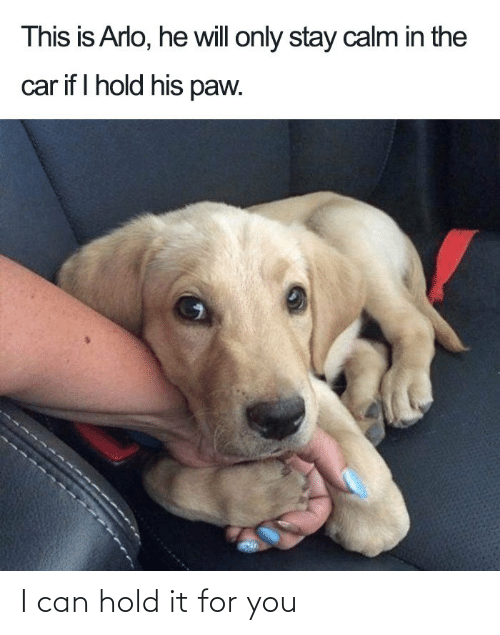 hold: I can hold it for you