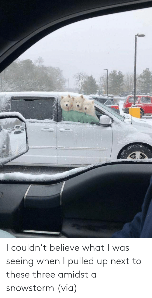 next: I couldn't believe what I was seeing when I pulled up next to these three amidst a snowstorm(via)