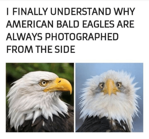 Philadelphia Eagles, American, and Why: I FINALLY UNDERSTAND WHY  AMERICAN BALD EAGLES ARE  ALWAYS PHOTOGRAPHED  FROM THE SIDE