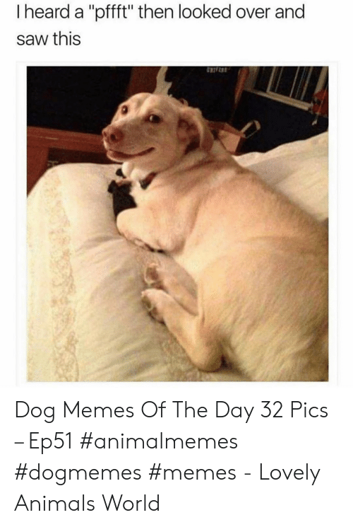 """Animals, Memes, and Saw: I heard a """"pfft"""" then looked over and  saw this Dog Memes Of The Day 32 Pics – Ep51 #animalmemes #dogmemes #memes - Lovely Animals World"""