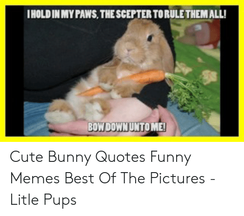 🐣 25+ Best Memes About Bunny Quotes | Bunny Quotes Memes