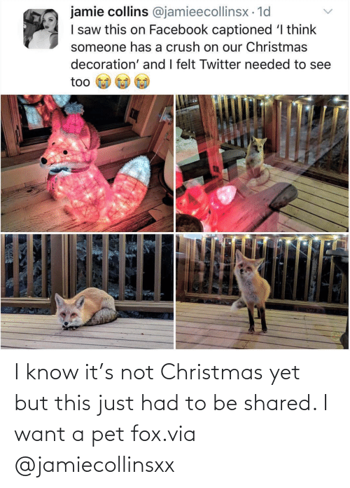 Christmas: I know it's not Christmas yet but this just had to be shared. I want a pet fox.via @jamiecollinsxx