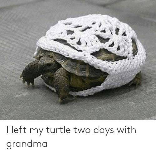 two: I left my turtle two days with grandma